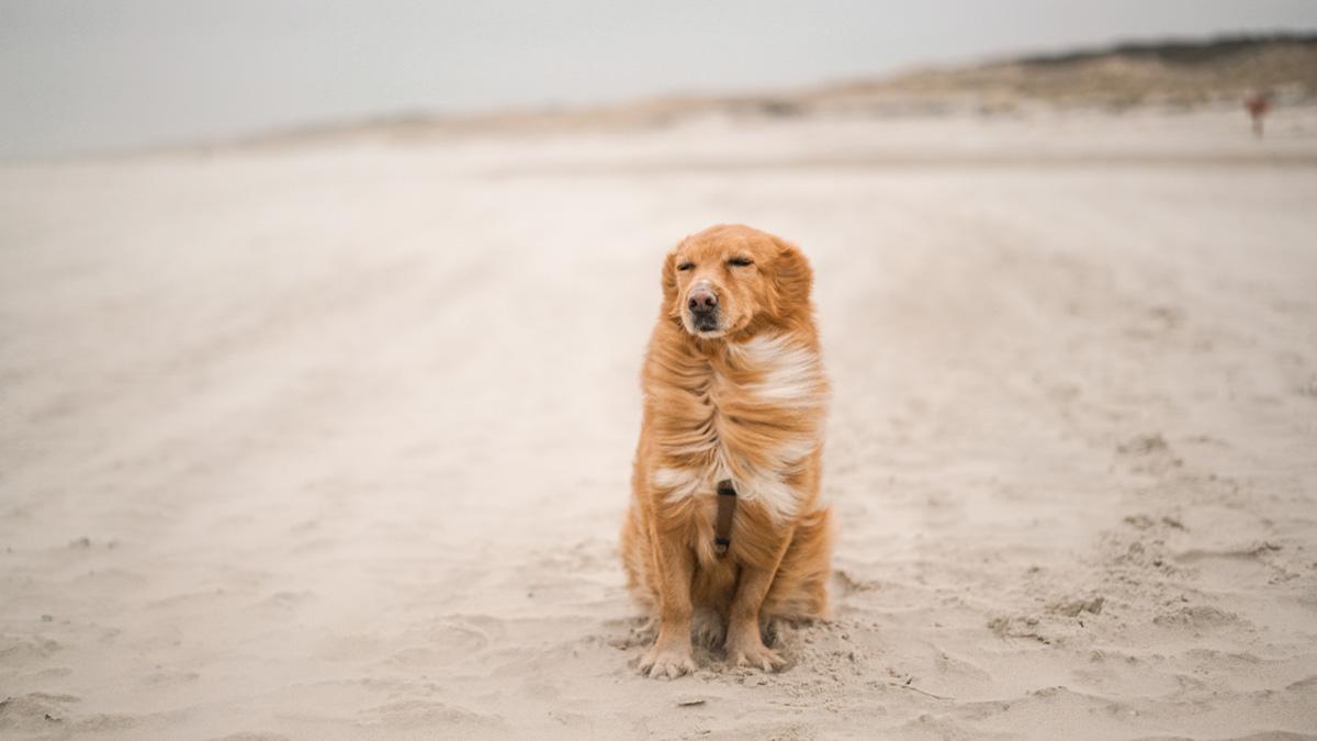 Nicht den Kopf in den Sand stecken